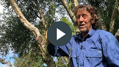 Geoff Lawton Permaculture design certificate course video message 2019 Greening The Desert Project PDC